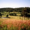 Hill Top Country Guest House and Villas